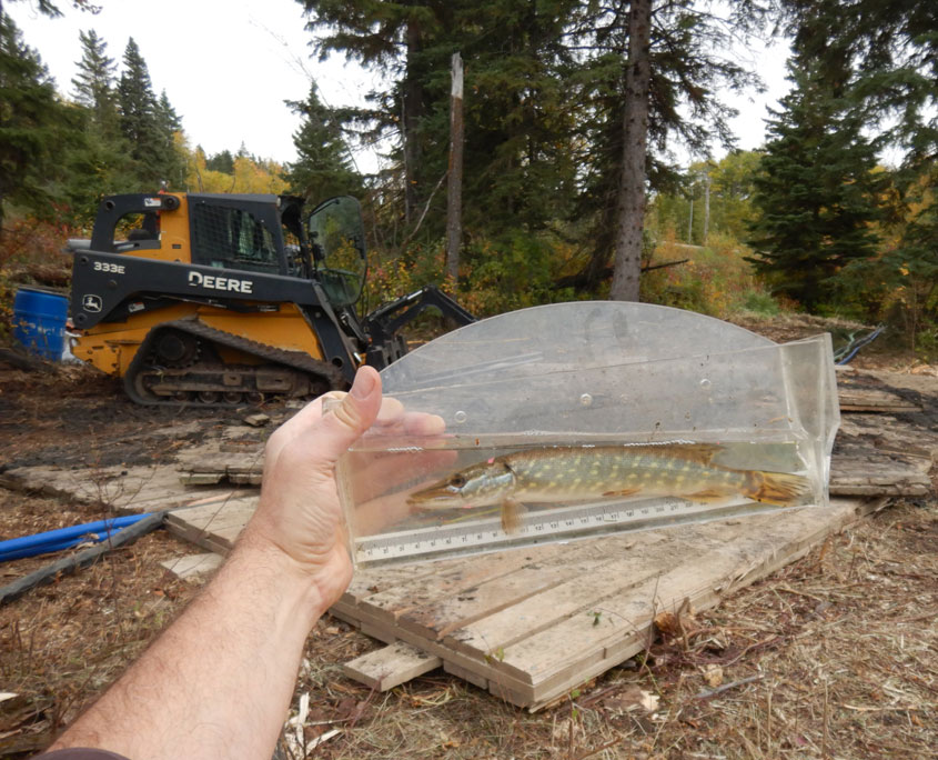 environmental study samples Alberta